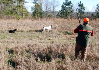 Hunting released quail on a preserve can offer hunters a chance to relive a time 50 years ago when bobwhite was king in the Southeast.