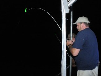 Glow tips are a great idea for fishermen targeting Santee Cooper catfish after dark; they are a tremendous help seeing and recognizing bites.