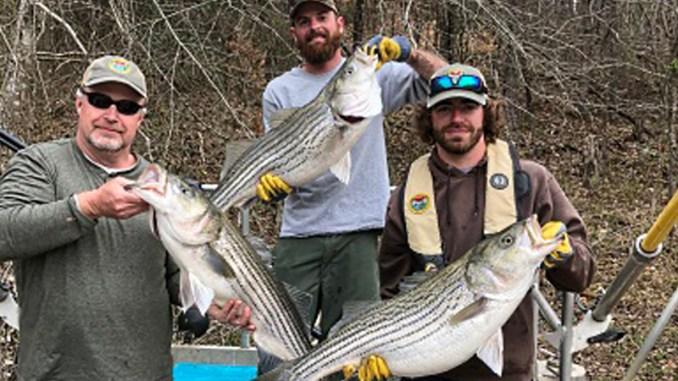 Lake Hartwell Stripers