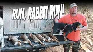Rabbit hunters love the sound of beagles