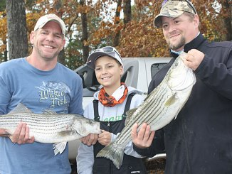 High Rock's winter striped bass