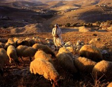 Abused Women Following the Shepherd