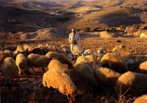 Shepherd and sheep 2