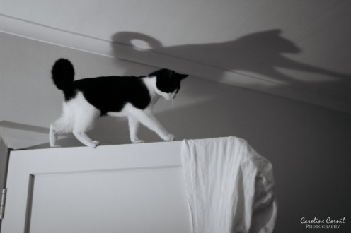 Black and white cat and shadow