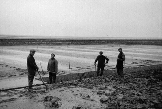 Vier slikwerkers op het wad achter de Westpolder