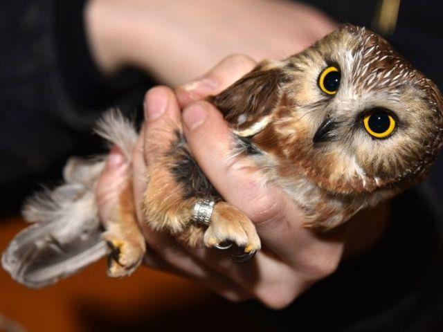 635965910846755080-Owl-Banding-01 Author's Blog Owls