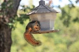 squirrel-on-bird-feeder-300x200 Author's Blog But First Coffee