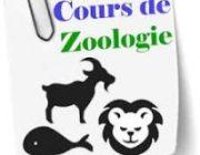 Quelques termes de zoologie, épisode 3
