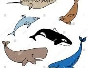Les mammifères marins et le scrabble