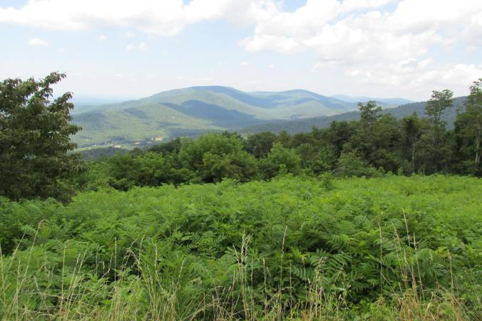 Shenandoah National Park landscape
