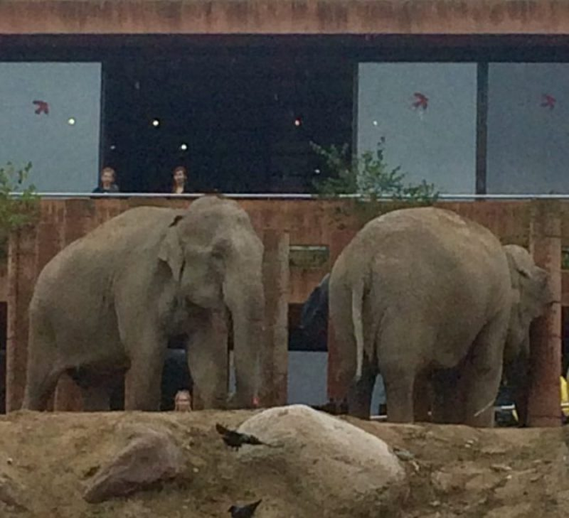 Elephants in Fredericksberg Have
