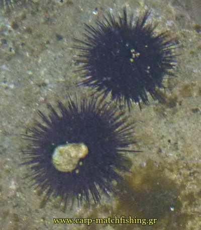 axinoi-carpmatchfishing