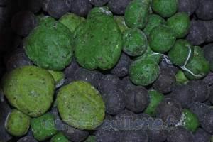 Bouillettes vertes et bleues