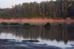 Frènes sur les rive de la Loire à Sigloy