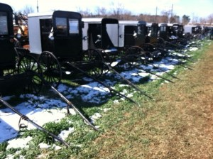 Amish buggies at a local mud sale featured in Sold on Love.
