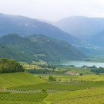 La tradizione vitivinicola del Trentino.