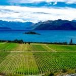 A spasso per la Nuova Zelanda: approfondimenti del Sauvignon Blanc e del Pinot Noir.
