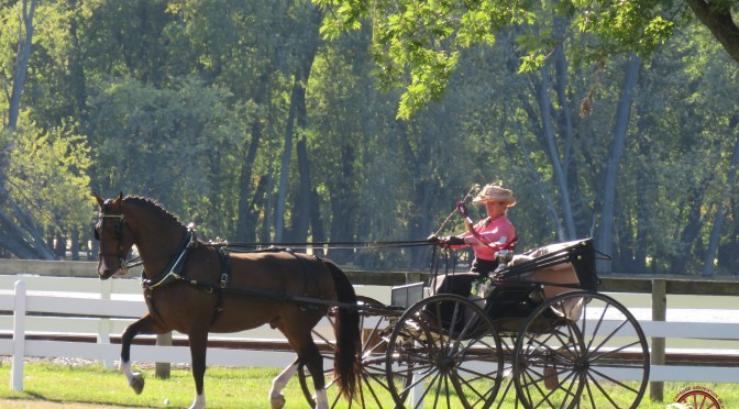 9 Things to do at the end of Carriage Driving Show Season