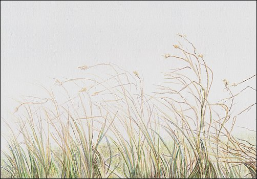 Drawing Autumn Grass in Colored Pencil - Step 6