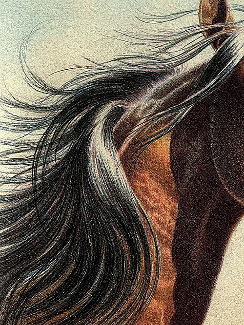 Tips for Drawing Hair in Colored Pencil 2
