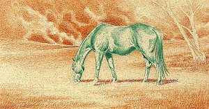 Green Pastures - Complementary Under Drawing