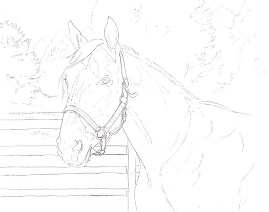 How to Draw a Horse Using a Grid Step 5