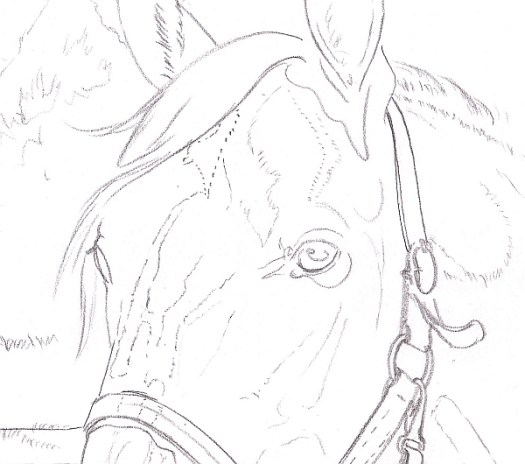 How to Draw a Horse Using a Grid Step 6