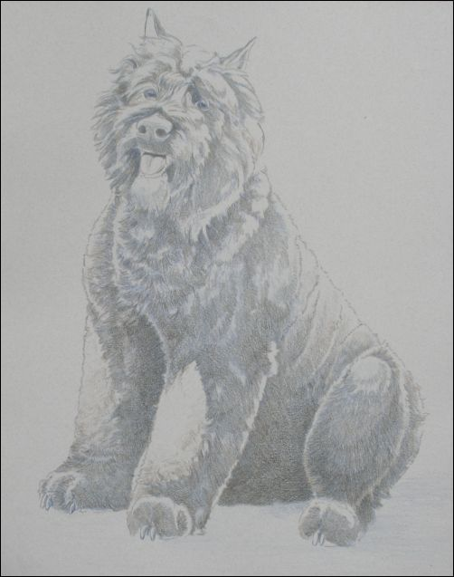 How to Draw a Dog in Colored Pencil Part 2 - Dark Brown Layer