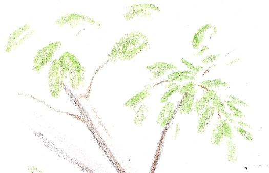 Colored Pencil Plein Air Drawing Week 1 Detail 2
