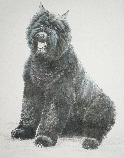 How to Draw a Dog with Colored Pencils Alcohol Blend