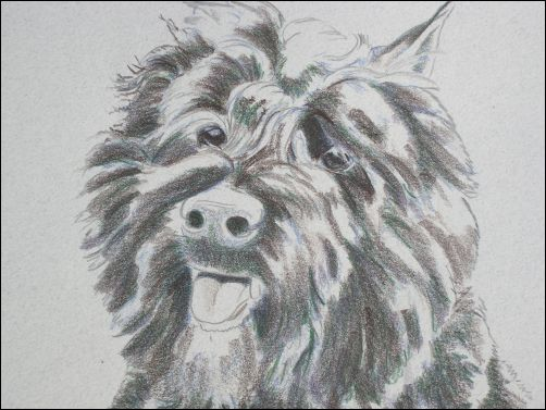 How to Draw a Dog in Colored Pencils Part 3 - Dark Umber Layer Detail 1