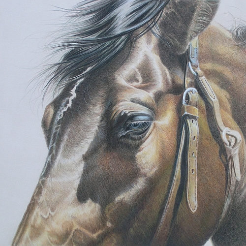 How to Finish a Colored Pencil Drawing - A Square Composition