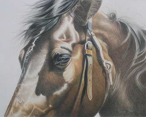 How to Finish a Colored Pencil Drawing - Finishing the Bridle