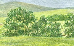 Drawing Natural Looking Landscapes - How to Do a Water Soluble Under Drawing