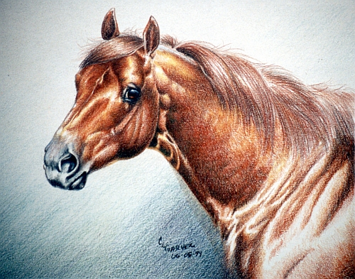 Four Colored Pencil Lessons - Covering Up Mistakes