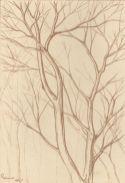 2017 Plein Air Drawings - 2017-09-04 Bare Trees