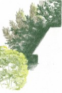 2017 Plein Air Drawings - 2017-09-18 Tree Study