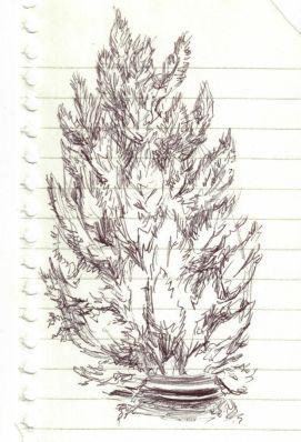 2017 Plein Air Drawings - 2017-11-03 3 Potted Pine Tree