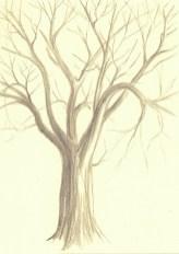 2017 Plein Air Drawings - 2017-12-14 Oak Tree