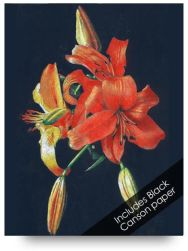 Day Lily Colored Pencil Drawing Kits for Beginners