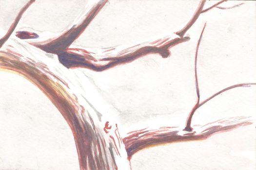 How to Paint a Tree With Snow in Watercolor Pencils - Step 3