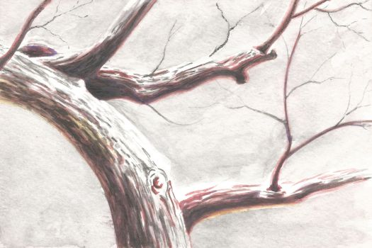 How to Paint a Tree With Snow in Watercolor Pencils - Step 4
