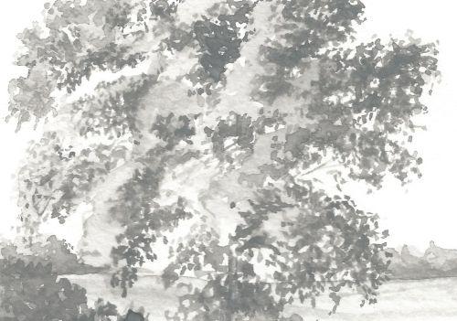 Weekly Drawing Week 2 - Large Tree Detail