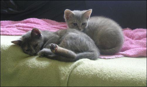 Kitten Update - Pee Wee & Sorrowful