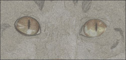 How to Draw Cat Eyes - Step 4b