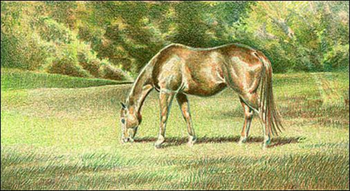 Draw a Horse Using the Complementary Under Drawing Method - Step 5
