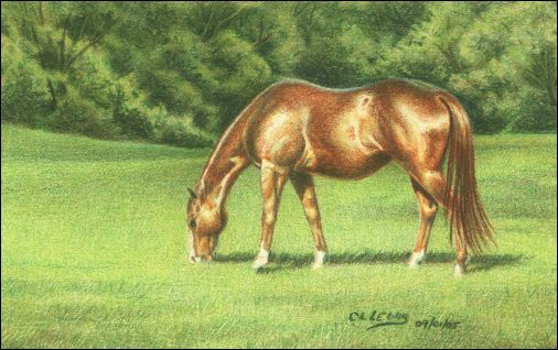 Draw a Horse Using the Complementary Under Drawing Method - Step 7
