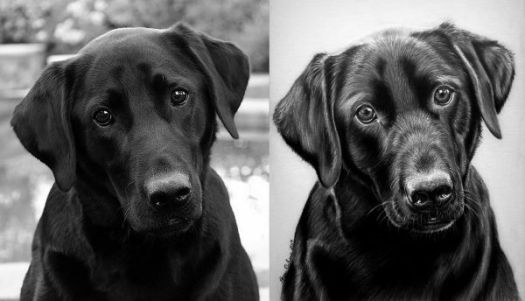 How to Draw Black Fur - Convert your reference and portrait to black-and-white for a side-by-side comparison of values.