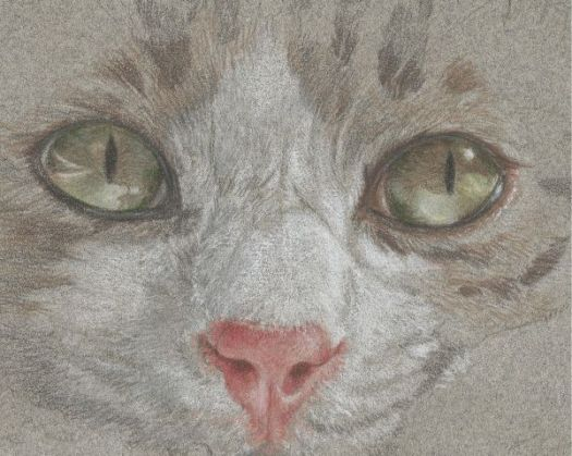 How to Draw Textures with Colored Pencil - Drawing Fur.