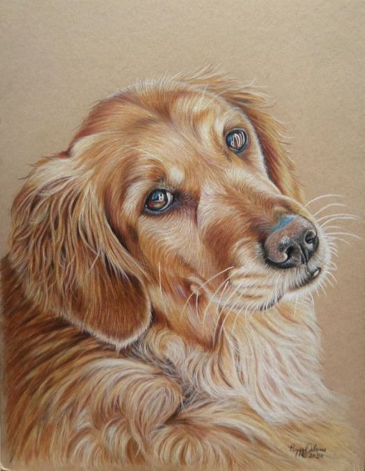 How to Draw a Golden Retriever - The finished portrait.